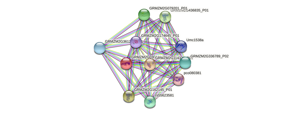 GRMZM2G030144_P01 protein (Zea mays) - STRING interaction network