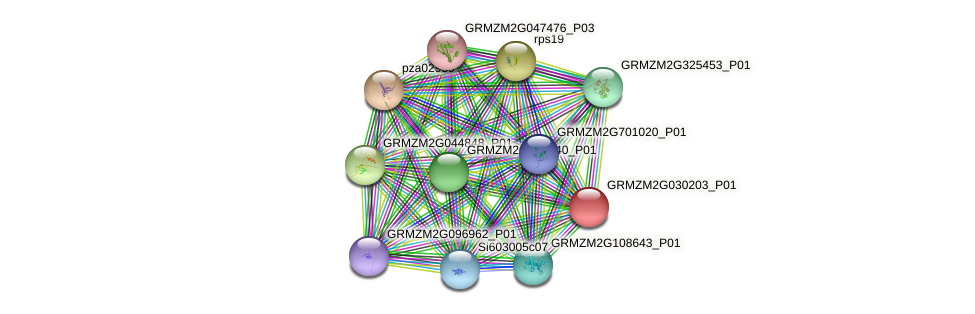 GRMZM2G030203_P01 protein (Zea mays) - STRING interaction network