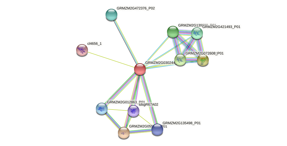 GRMZM2G030244_P01 protein (Zea mays) - STRING interaction network