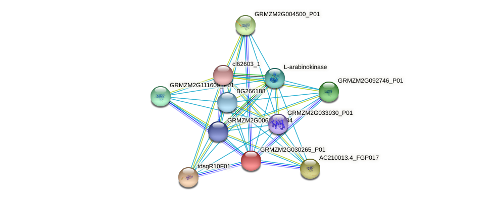 GRMZM2G030265_P01 protein (Zea mays) - STRING interaction network