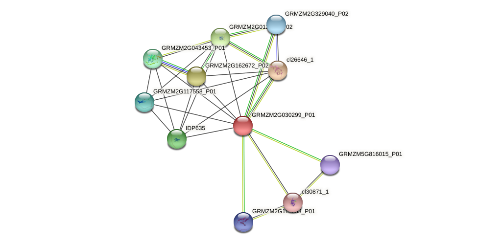GRMZM2G030299_P01 protein (Zea mays) - STRING interaction network
