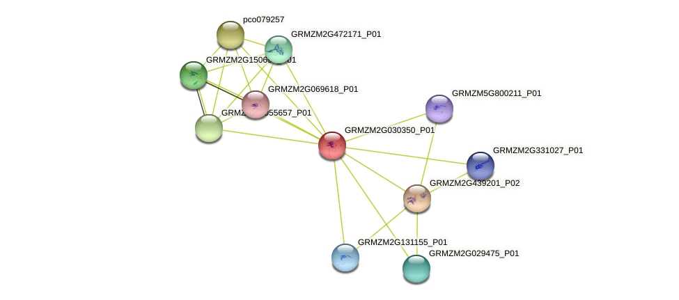 GRMZM2G030350_P01 protein (Zea mays) - STRING interaction network