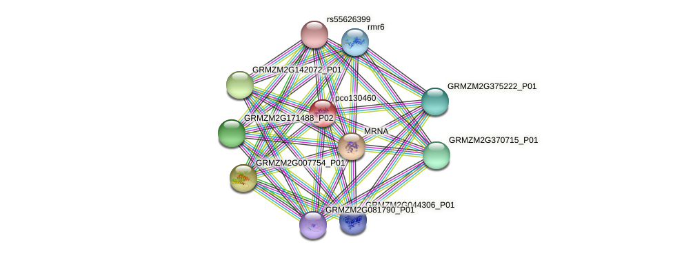 pco130460 protein (Zea mays) - STRING interaction network