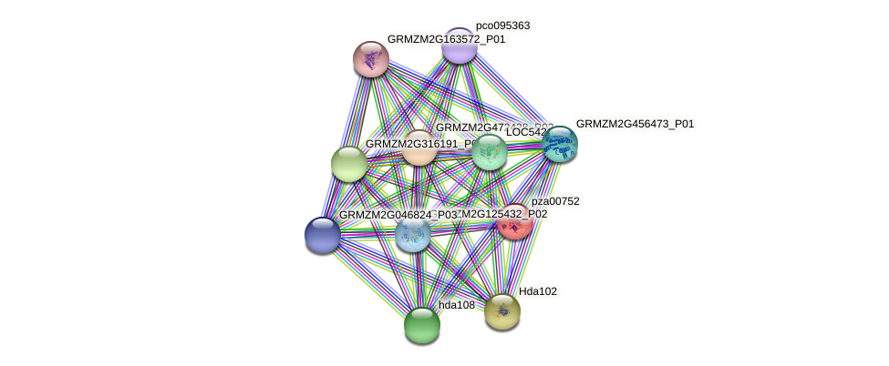 Zm.5131 protein (Zea mays) - STRING interaction network