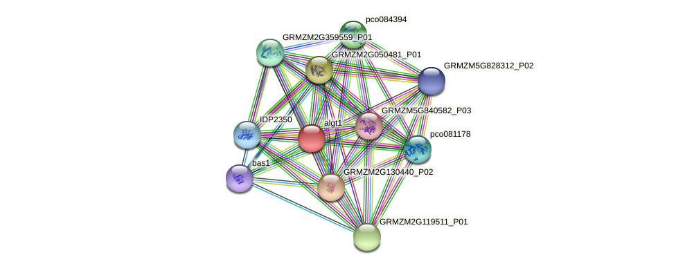 GRMZM2G030571_P03 protein (Zea mays) - STRING interaction network