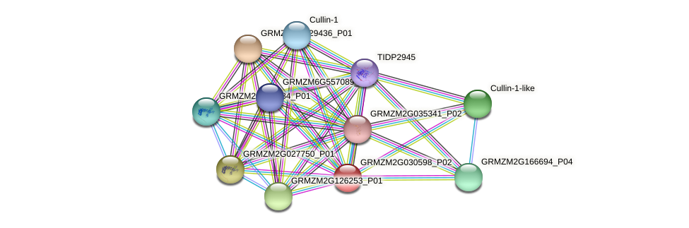 GRMZM2G030598_P02 protein (Zea mays) - STRING interaction network