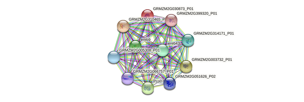 GRMZM2G030873_P01 protein (Zea mays) - STRING interaction network