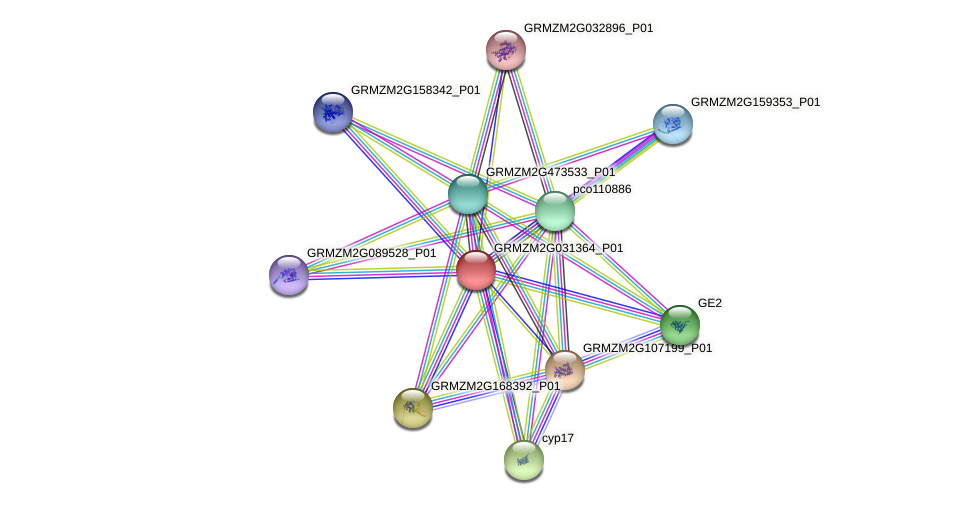 Zm.151434 protein (Zea mays) - STRING interaction network