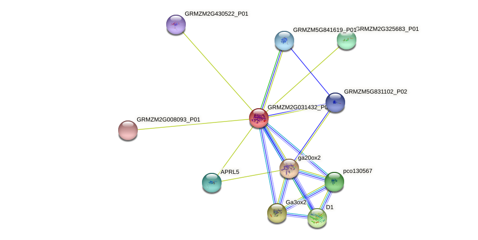 GRMZM2G031432_P01 protein (Zea mays) - STRING interaction network
