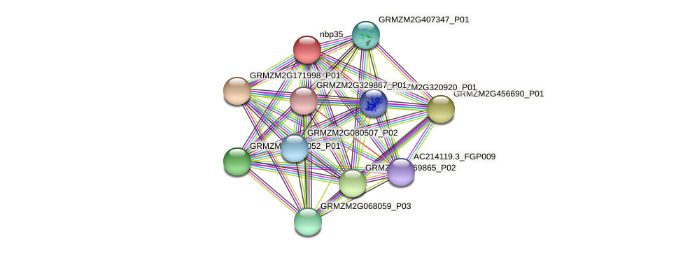 nbp35 protein (Zea mays) - STRING interaction network