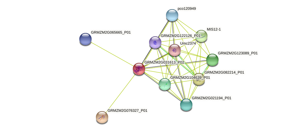 GRMZM2G031613_P02 protein (Zea mays) - STRING interaction network