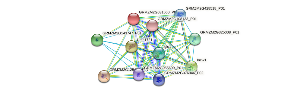 GRMZM2G031660_P01 protein (Zea mays) - STRING interaction network