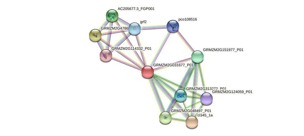 GRMZM2G031677_P01 protein (Zea mays) - STRING interaction network