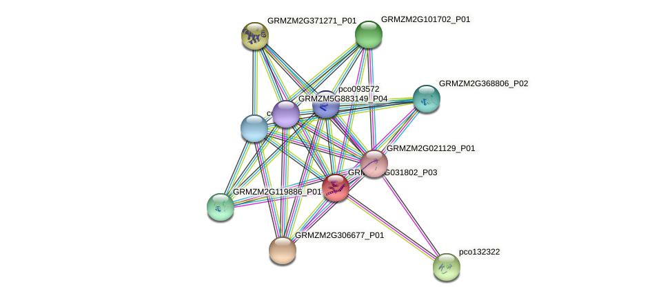 GRMZM2G031802_P03 protein (Zea mays) - STRING interaction network