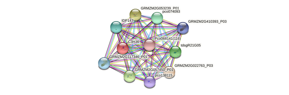 C3H36 protein (Zea mays) - STRING interaction network