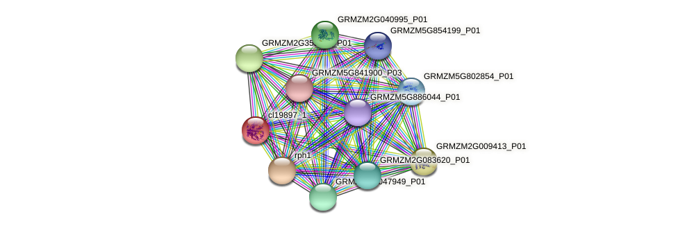 cl19897_1 protein (Zea mays) - STRING interaction network