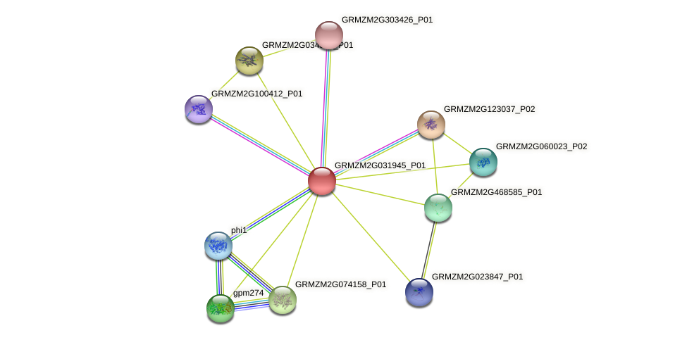 GRMZM2G031945_P01 protein (Zea mays) - STRING interaction network
