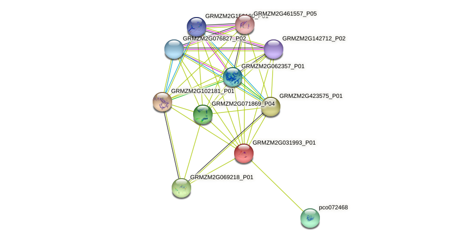 GRMZM2G031993_P01 protein (Zea mays) - STRING interaction network