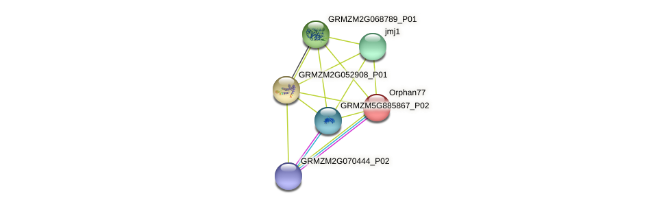 Orphan77 protein (Zea mays) - STRING interaction network