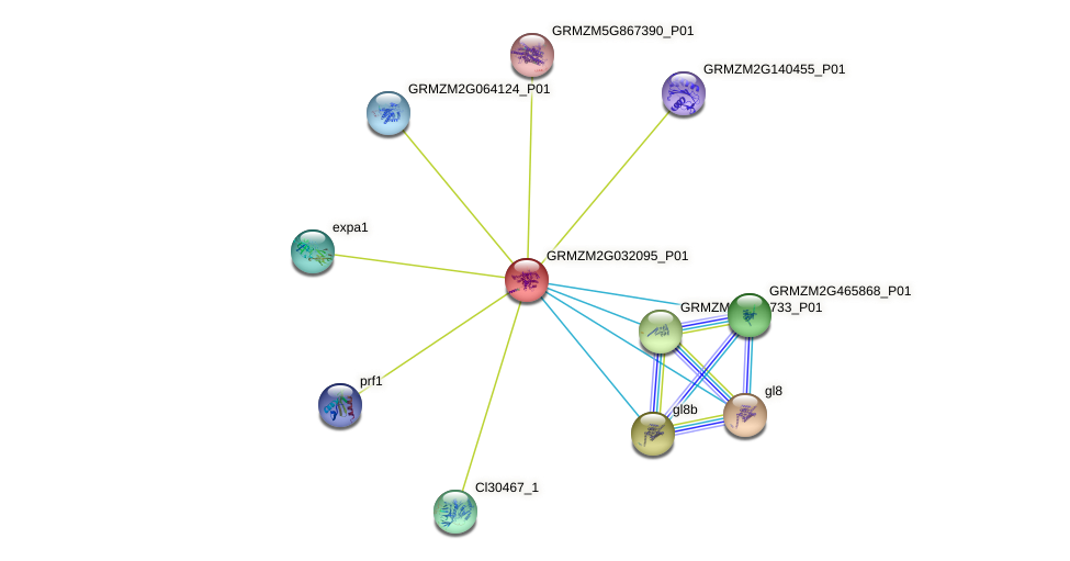GRMZM2G032095_P01 protein (Zea mays) - STRING interaction network