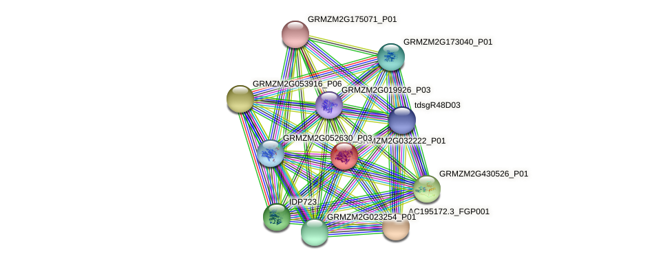 GRMZM2G032222_P01 protein (Zea mays) - STRING interaction network