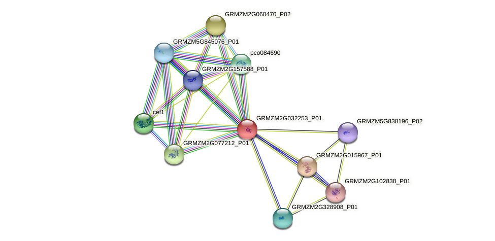 GRMZM2G032253_P01 protein (Zea mays) - STRING interaction network