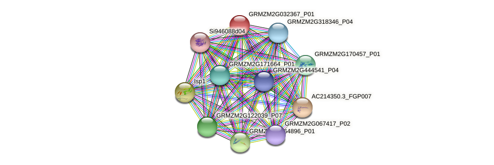 GRMZM2G032367_P01 protein (Zea mays) - STRING interaction network