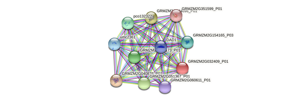 GRMZM2G032409_P01 protein (Zea mays) - STRING interaction network