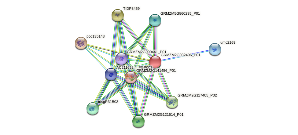 GRMZM2G032496_P01 protein (Zea mays) - STRING interaction network