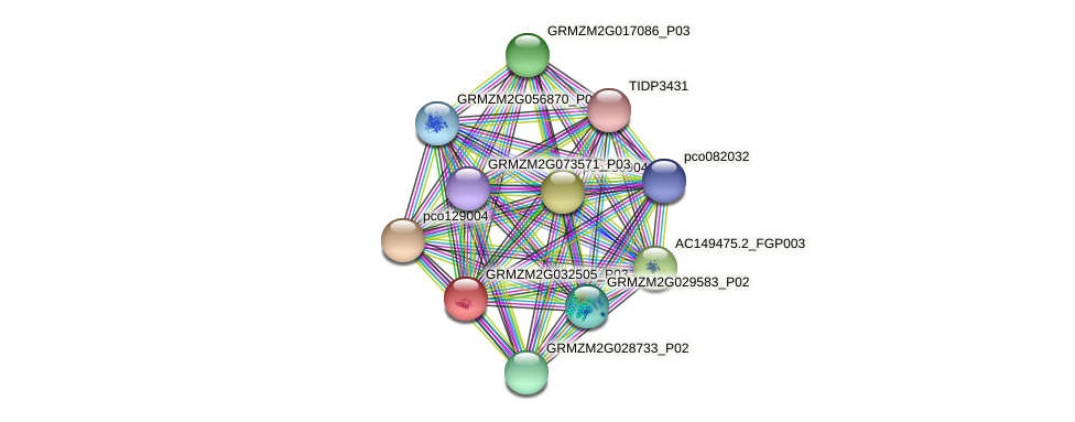 GRMZM2G032505_P03 protein (Zea mays) - STRING interaction network