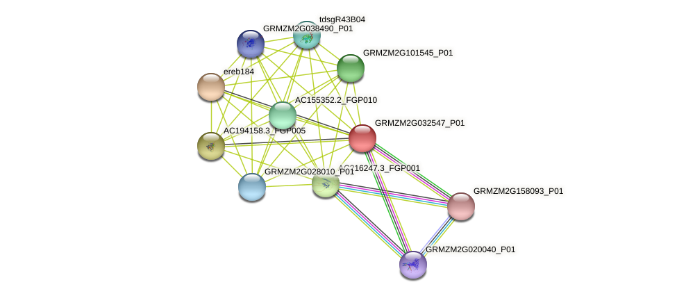 GRMZM2G032547_P01 protein (Zea mays) - STRING interaction network