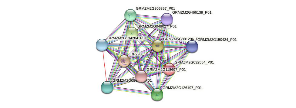 GRMZM2G032554_P01 protein (Zea mays) - STRING interaction network