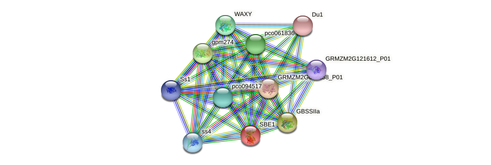 SBE1 protein (Zea mays) - STRING interaction network