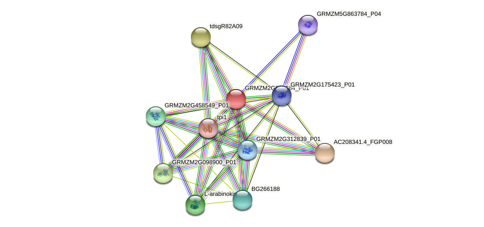 Zm.26003 protein (Zea mays) - STRING interaction network