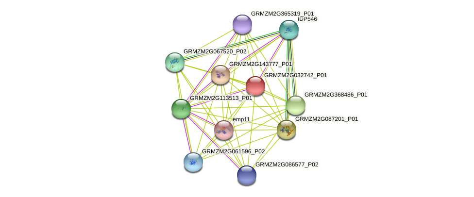 GRMZM2G032742_P01 protein (Zea mays) - STRING interaction network