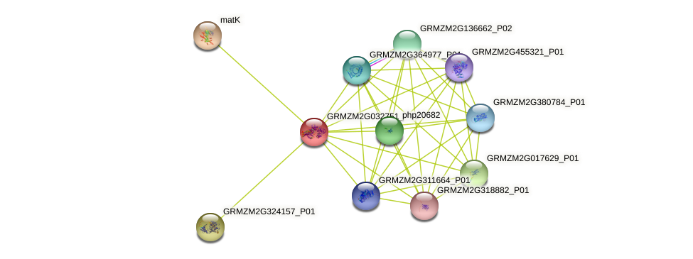 GRMZM2G032751_P01 protein (Zea mays) - STRING interaction network