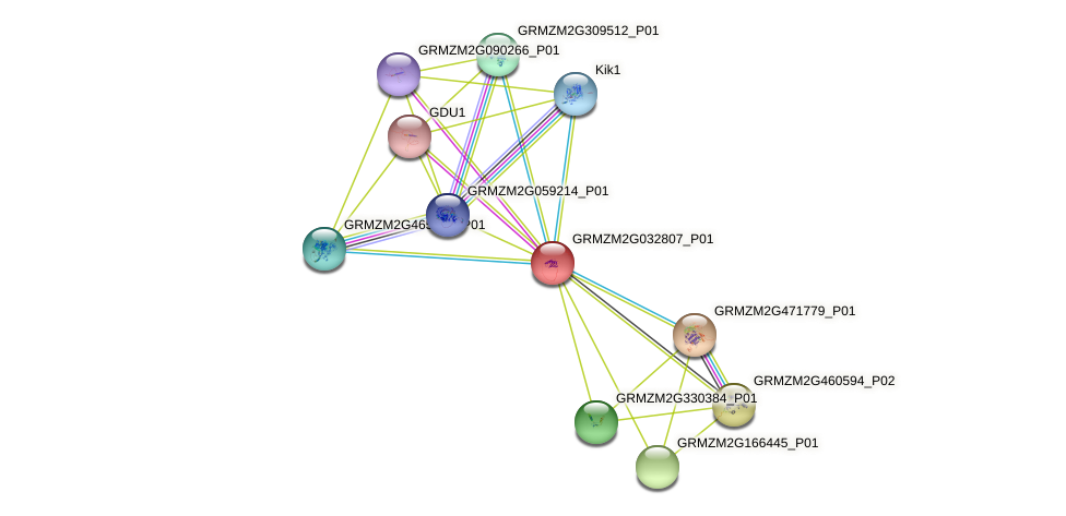 GRMZM2G032807_P01 protein (Zea mays) - STRING interaction network
