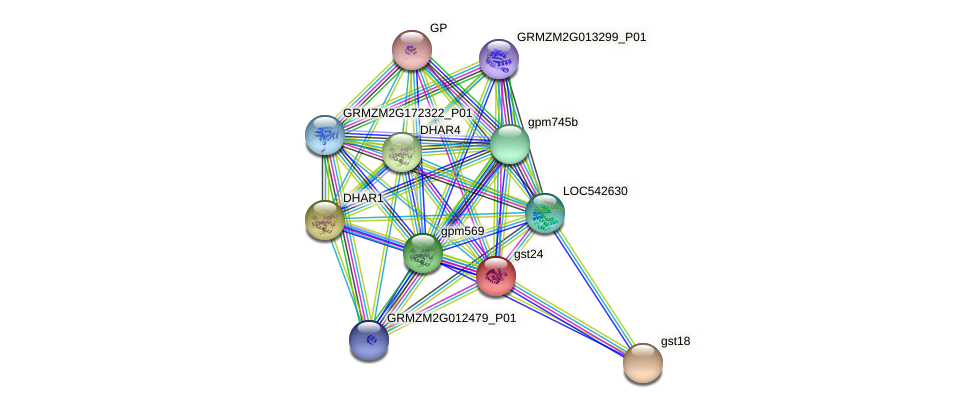 gst24 protein (Zea mays) - STRING interaction network