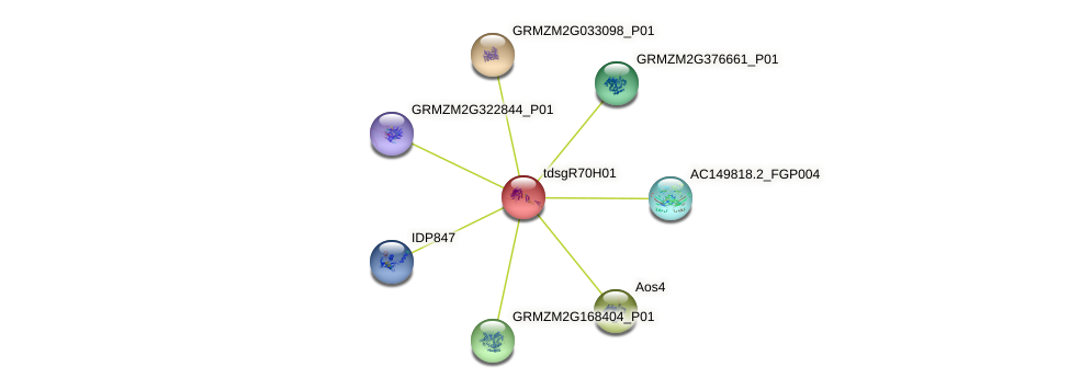 GRMZM2G033126_P01 protein (Zea mays) - STRING interaction network