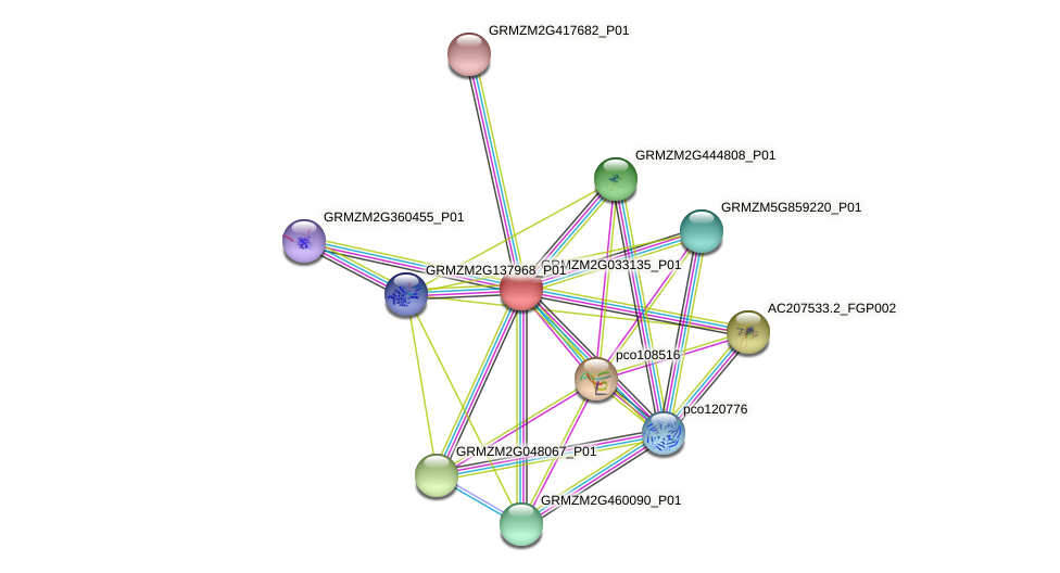 GRMZM2G033135_P01 protein (Zea mays) - STRING interaction network