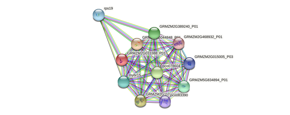 GRMZM2G033388_P01 protein (Zea mays) - STRING interaction network