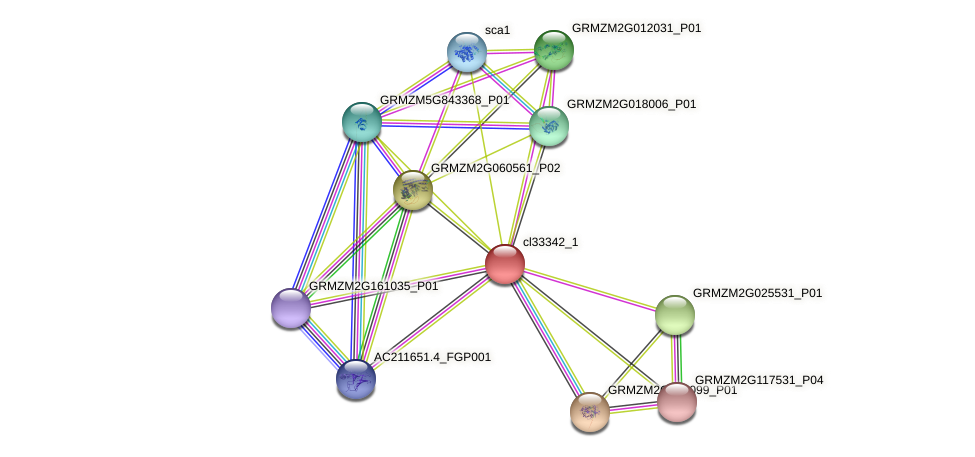 cl33342_1 protein (Zea mays) - STRING interaction network