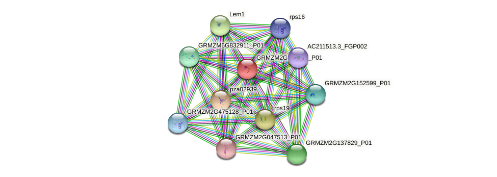 GRMZM2G033653_P01 protein (Zea mays) - STRING interaction network