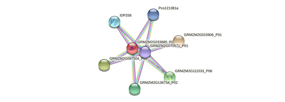GRMZM2G033685_P01 protein (Zea mays) - STRING interaction network