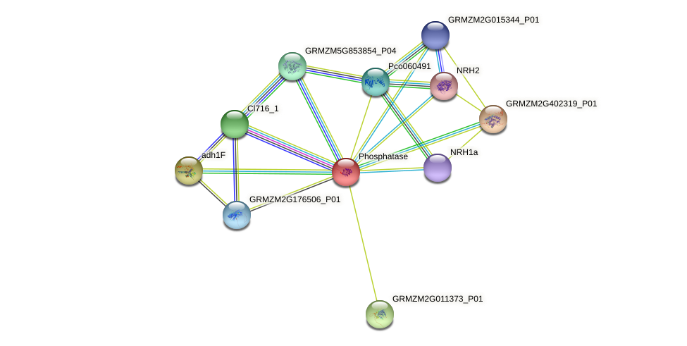 GRMZM2G033787_P01 protein (Zea mays) - STRING interaction network