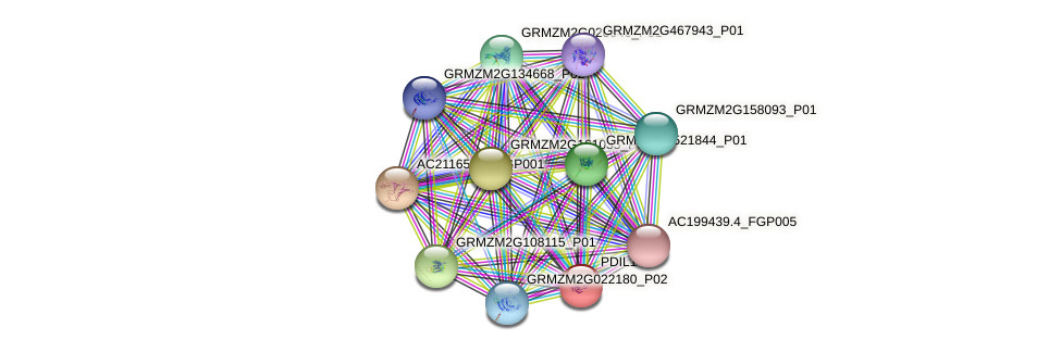 PDIL1-4 protein (Zea mays) - STRING interaction network