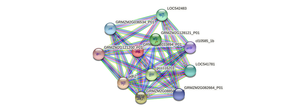 GRMZM2G033894_P01 protein (Zea mays) - STRING interaction network
