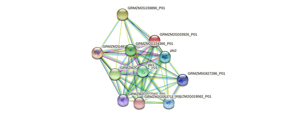 GRMZM2G033926_P01 protein (Zea mays) - STRING interaction network
