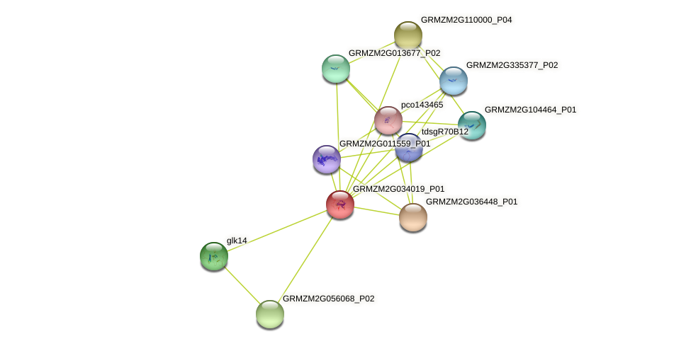 GRMZM2G034019_P01 protein (Zea mays) - STRING interaction network