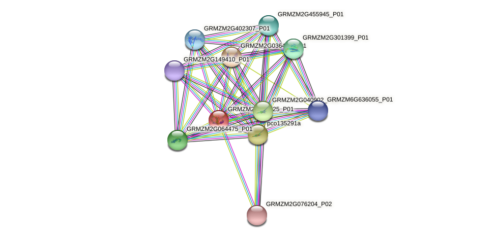 GRMZM2G034025_P01 protein (Zea mays) - STRING interaction network